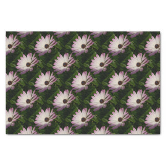 Side View of A Pink and White Osteospermum Tissue Paper