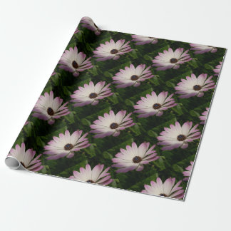 Side View of A Pink and White Osteospermum Wrapping Paper