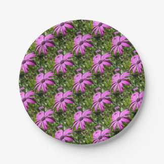 Side View Of A Purple Osteospermum With Garden Bac 7 Inch Paper Plate