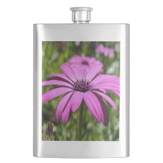 Side View Of A Purple Osteospermum With Garden Bac Hip Flask