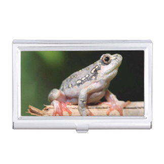 Side View Of Frog On Reed Business Card Holders