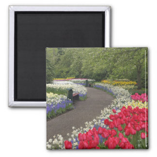 Sidewalk through tulips, daffodils, and square magnet