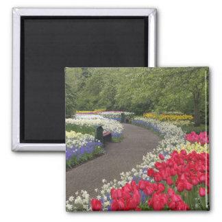 Sidewalk through tulips, daffodils, and refrigerator magnets