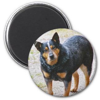 Sidney the Blue Heeler 2 Inch Round Magnet
