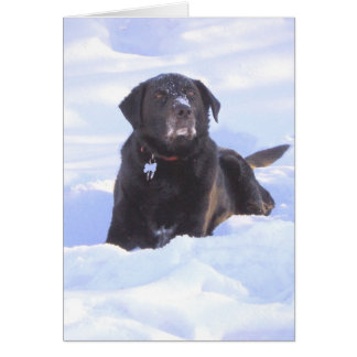 """Sidney the Wonder Dog"" Card"