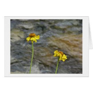 Sierra Wildflowers by Woods Creek Card