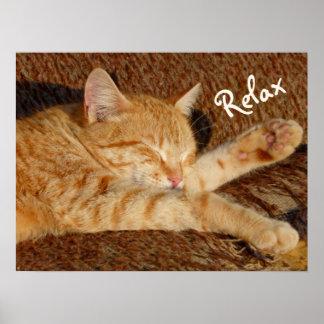 Siesta - Relaxing Cat Poster