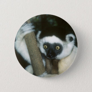 Sifaka (Lemur), Madagascar 2 Inch Round Button