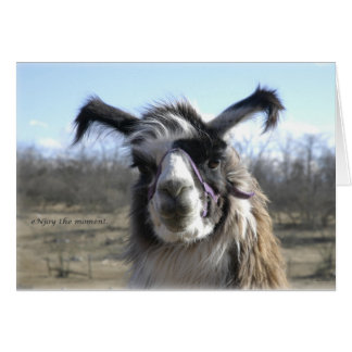 sigh_llama_njoy_D1477 Card