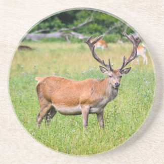 Silent Stag Drink Coasters