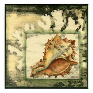 Silhouette Conch Shell Acrylic Wall Art