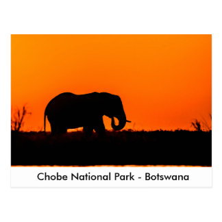 Silhouette of an Elephant Bull at Sunset Postcard