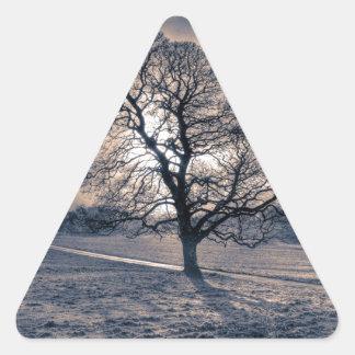 Silhouette of an old Oak tree Triangle Sticker