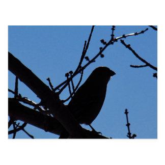 Silhouette of Bird Postcard