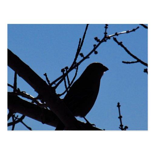 Silhouette of Bird Postcards