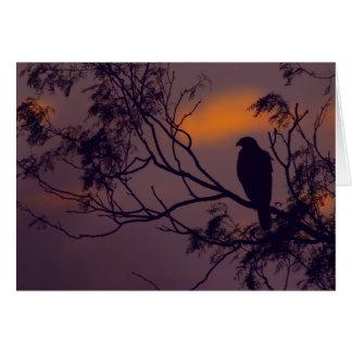 Silhouette of Harris Hawk (Parabuteo unicinctus) Card