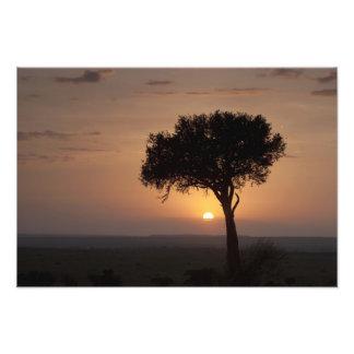 Silhouette of tree on plain, Masai Mara 2 Photo Print