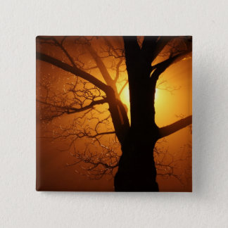 Silhouette Tree in Sunset 2 Inch Square Button