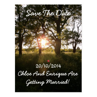 Silhouette Trees & Sunlight Save The Date Wedding Postcard