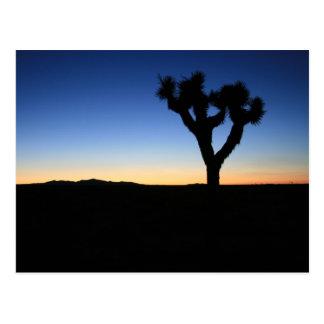 Silhouetted Joshua Tree Postcard