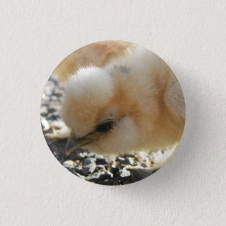 Silkie Chick Button