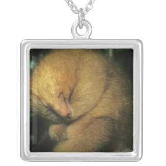Silky Pygmy) Anteater, Cyclopes didactylus), Square Pendant Necklace