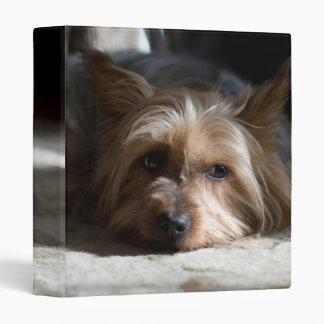Silky / yorkshire (yorkie) terrier binder
