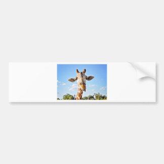 Silly Giraffe Bumper Sticker