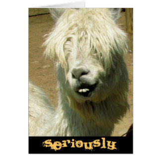 Silly Llama Birthday Card