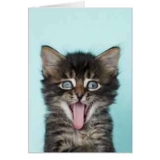 Silly Merlin Kitten Card
