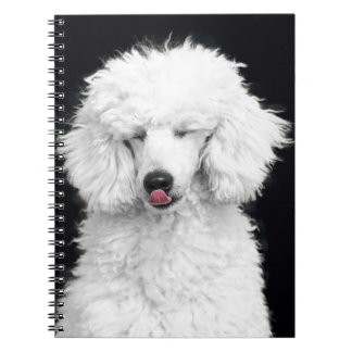 Silly White Poodle Spiral Notebooks