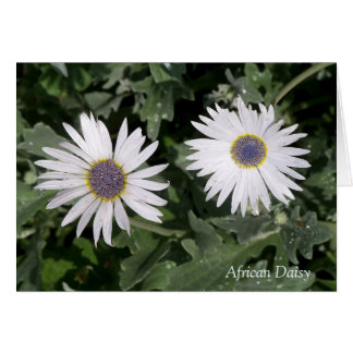 Silver African Daisy ❝There is a Flower❞ Quotation Card