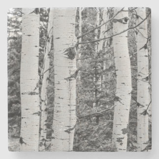 Silver Birch Tree Trunk Black and White Design Stone Coaster