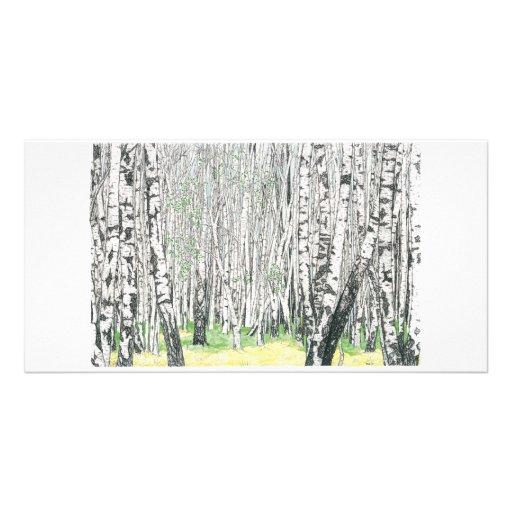 Silver Birch Wood - Photo Card