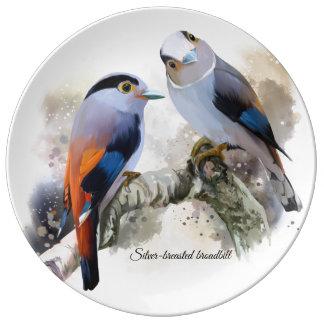 Silver-breasted broadbill plate