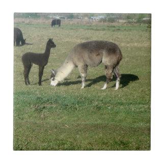 Silver Gray Alpaca & Cria Tile