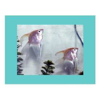 Silver Pearl Angelfish Postcard
