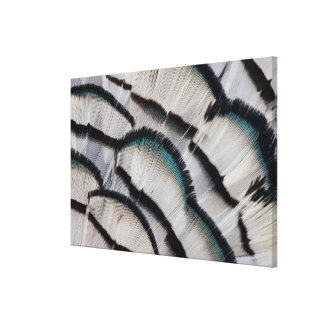 Silver Pheasant Feather Design Canvas Print