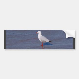 Silver Seagull Bumper Sticker