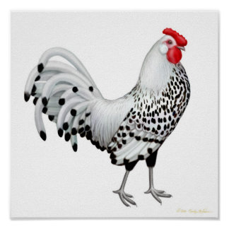 Silver Spangled Hamburg Rooster Print
