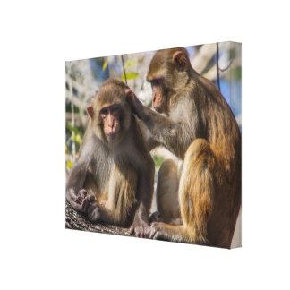 Silver Springs Monkeys Canvas Print