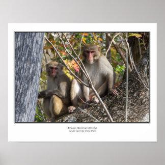Silver Springs Monkeys Poster