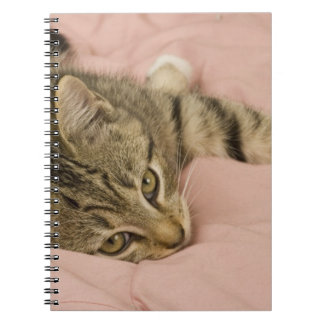 Silver tabby stretched out on bedspread spiral notebooks