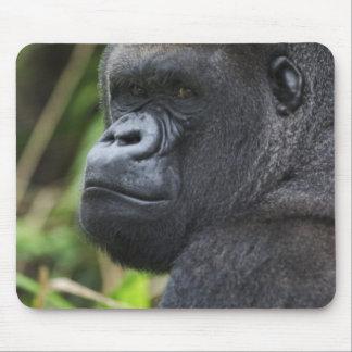 Silverback Lowland Gorilla, Gorilla Captive Mouse Pad