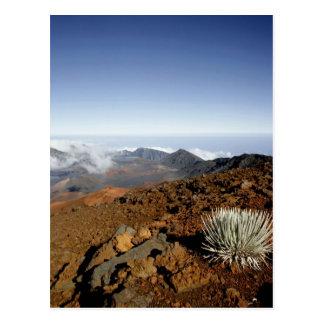 Silversword on Haleakala Crater  Rim from near Postcard
