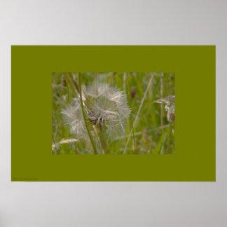 Silvery Dandelion in Meadow Poster