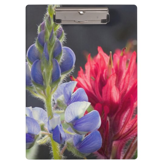 Silvery Lupine, Lavender Paintbrush Clipboard