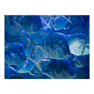 Silvery Tropical Fish Print