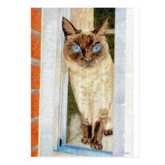 Simone at the Window (Siamese) Postcard