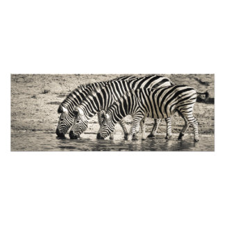 Simple Black and White Zebra Stripe Pattern Photo Print